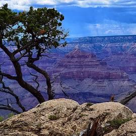 Lone Tree at Grand Canyon by Dana Hardy
