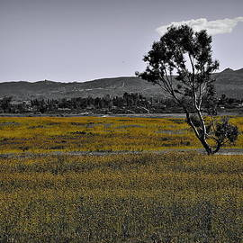 Lone Tree In Yellow Wildflowers by Glenn McCarthy Art and Photography