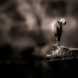 Lonely by Christine Sponchia
