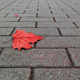 Lonely leaf by Julia's Images