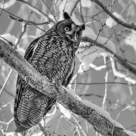 Michael Morse - Long Eared Winter Glow Black and White
