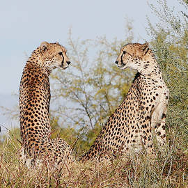 Looking at Each Other by Shoal Hollingsworth