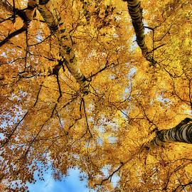 Looking Up by Allyson Schwartz