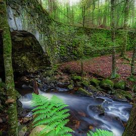 Lost Bridge by Bill Wakeley