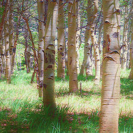 Mike Braun - Lost In The Woods - Kenosha Pass, Colorado