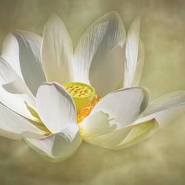 Lotus Blossom Magic by Dawn Currie