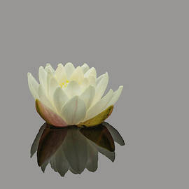Lotus Flower Ee by Jim Dollar