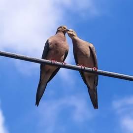 Love Birds by Kathy Gail