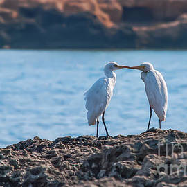 Love Is In The Air by Flo Photography