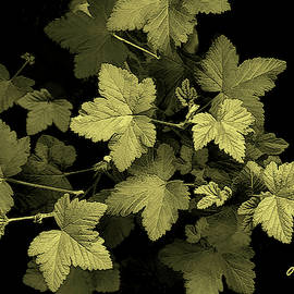 Lovely Leaves Still Life by Claudia O'Brien