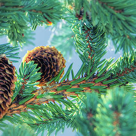 Lovely Pines by Elaine Malott