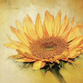 Lovely, Textured Sunflower by Terry Davis