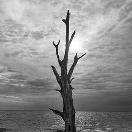 Lovers Key State Park Tree in Black and White by Dale Kohler
