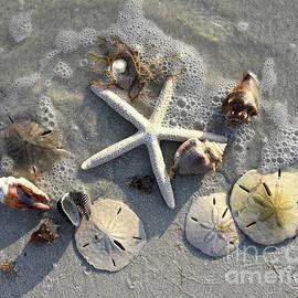 Low Tide Treasures by Catherine Sherman