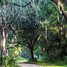 Lowcountry Forest by Mary Ann Artz