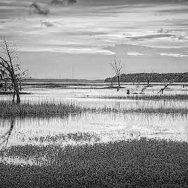Lowcountry High Tide by Phill Doherty