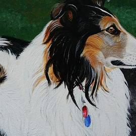 Lucky is a gorgeous collie by Amy Collier