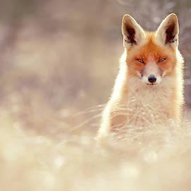 Luminous Fox by Roeselien Raimond
