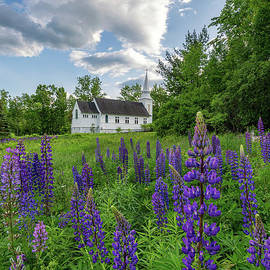 Lupine Bloom At Sugar Hill by Jesse MacDonald