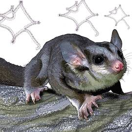 M is for Mahogany Glider by Joan Stratton