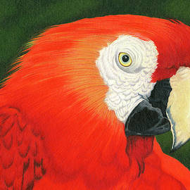 Macaw  by Theresa Rhodus
