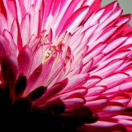 Macro Flower Series -4 by Arlane Crump