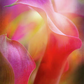 Magenta Calla Lilies by Terry Davis