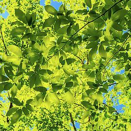 Magic Leaves by Dimitris Sivyllis