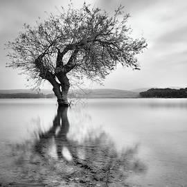 Magic tree. Sunrise at the lake by Guido Montanes Castillo