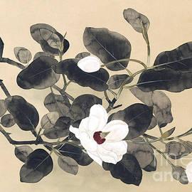 Magnolia Branch, Hanging Scroll by Yamamura Koka  Toyonari