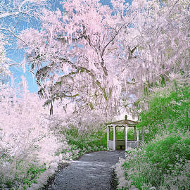 Magnolia Gazebo  by Jon Glaser