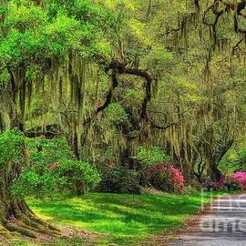 Magnolia Plantation And Gardens by Kathy Baccari