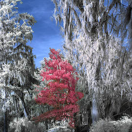 Magnolia Plantation In Red by Jon Glaser