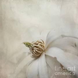 Magnolia Stellata by Eva Lechner