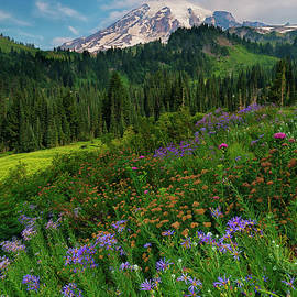 Majestic Color by Mike Dawson