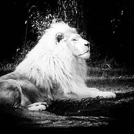 Majestic Lion King by Ann Skrobot