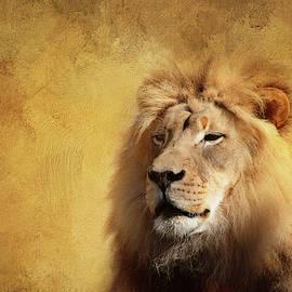 Majestic Lion by Terry Davis