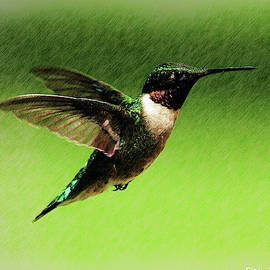 Male Ruby-throated Hummingbird by Deb McPherson