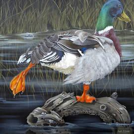 Mallard Duck by Phyllis Beiser
