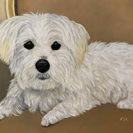 Maltese Dog by Karen Zuk Rosenblatt