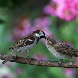 Mama And Baby Sparrow by Trina Ansel