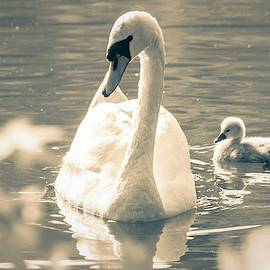 Mary Ann Artz - Mama Swan and Her Cygnet