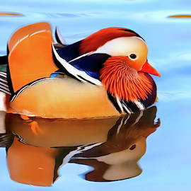 Mandarin duck at Central Park collection #5 by Geraldine Scull