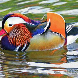 Regina Geoghan - Mandarin Duck Central Park-15