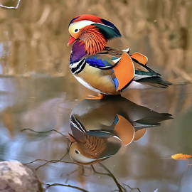 Mandarin duck in Central Park collection by Geraldine Scull