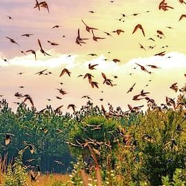 Many Tree Swallows by Lynne Pedlar