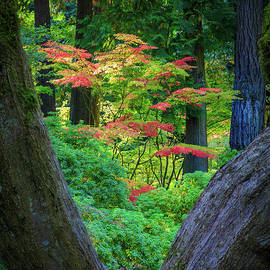 Maple and Trunk by Inge Johnsson