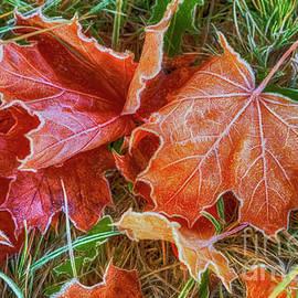 Maple Leaves 3 by Veikko Suikkanen