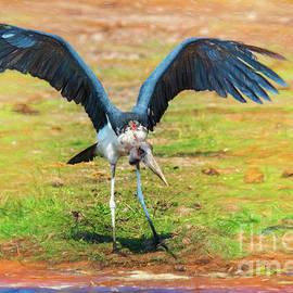 Maribou Stork by Kay Brewer
