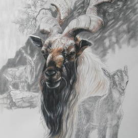 Markhor Goat by Barbara Keith